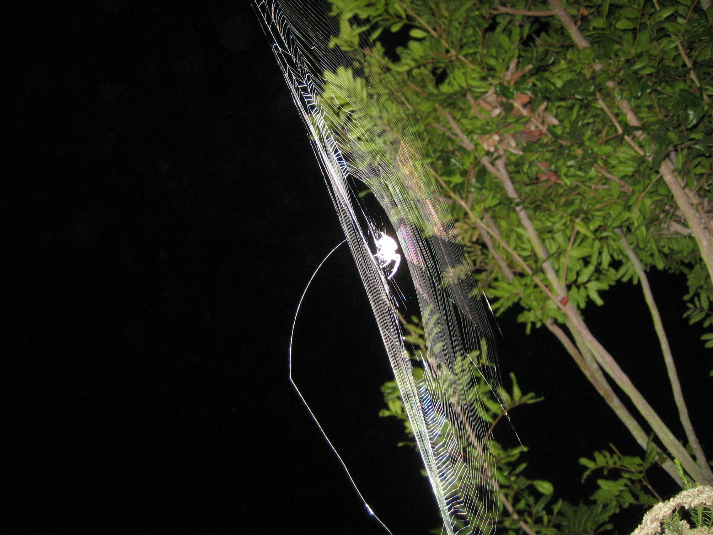 Wrecked Web