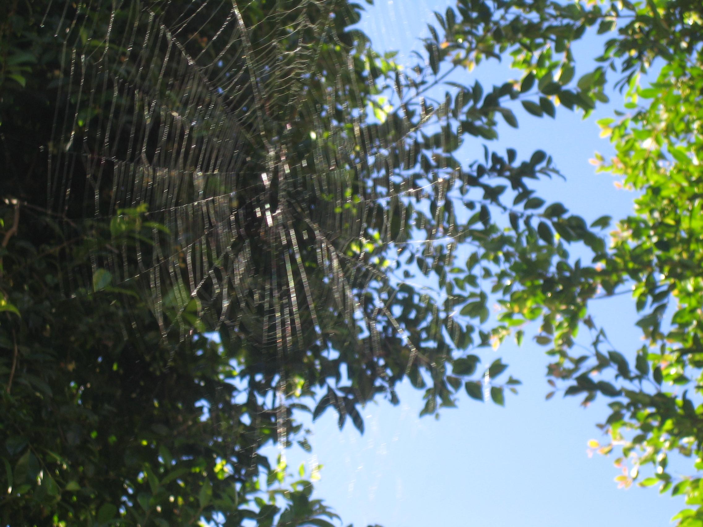Web in the Sun