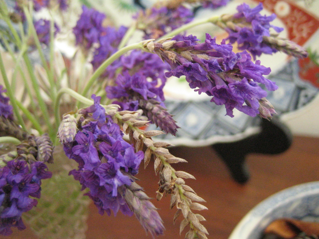 Lavender for my mom…